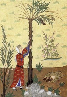 Virgin Mary nurtured by a palm tree, as described in the Quran.