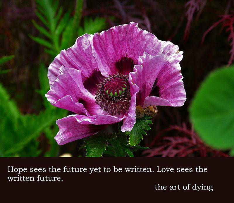poppy-139357_1920