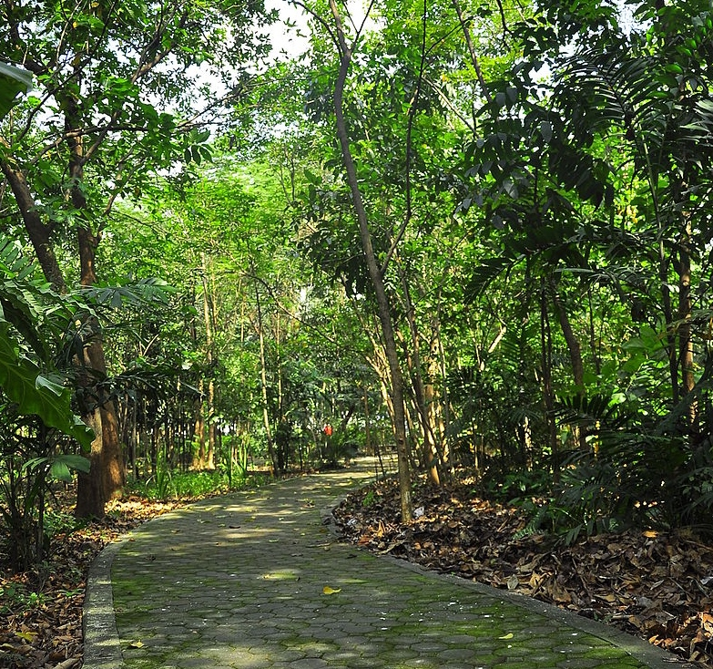 "Arrocerros Forest Park, also known as the ""Last Lung of Manila"" ADRIAN BIBLANIAS"